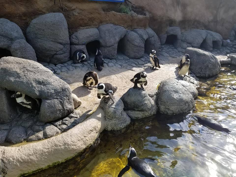 penguin adventure aquarium camden new jersey family